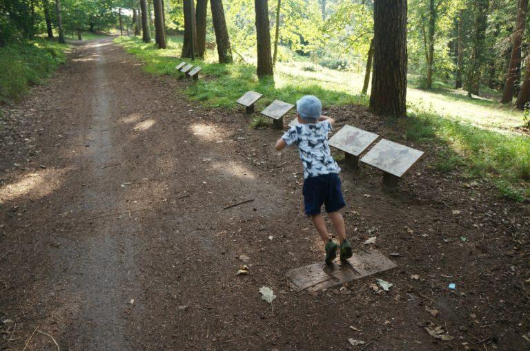 Veverčí stezka plná veverek