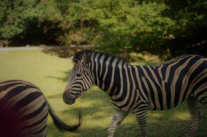 Skupinová rekreace Kemp Wolf a Safari Park Dvůr Králové