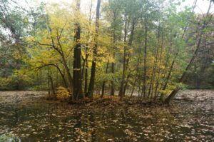 20 barevných podzimních výletů s dětmi okolo Prahy