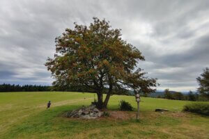 Za polevskými obry, za výhledy i na houpačku na stromě